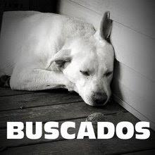FOTOS MASCOTAS BUSCADAS 2009