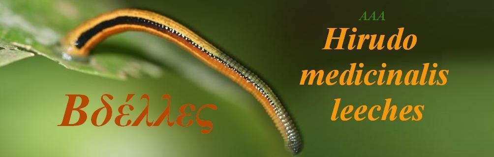 ΒΔΕΛΛΑ AAA  Hirudo medicinalis Medical leeches ΒΔΕΛΛΑ ΒΔΕΛΛΕΣ βδέλλα βδέλλες  θεραπεία με βδέλλες