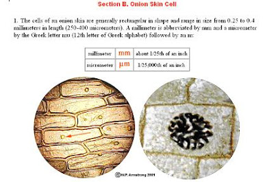 Biology form 4 animal cell plant cell peringatan penting onion skin cell cheek squamous epithelial cells ccuart Gallery