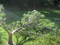 The tree attempts to move to the neighbor's yard