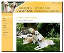 Goldenfall Retriever Zucht