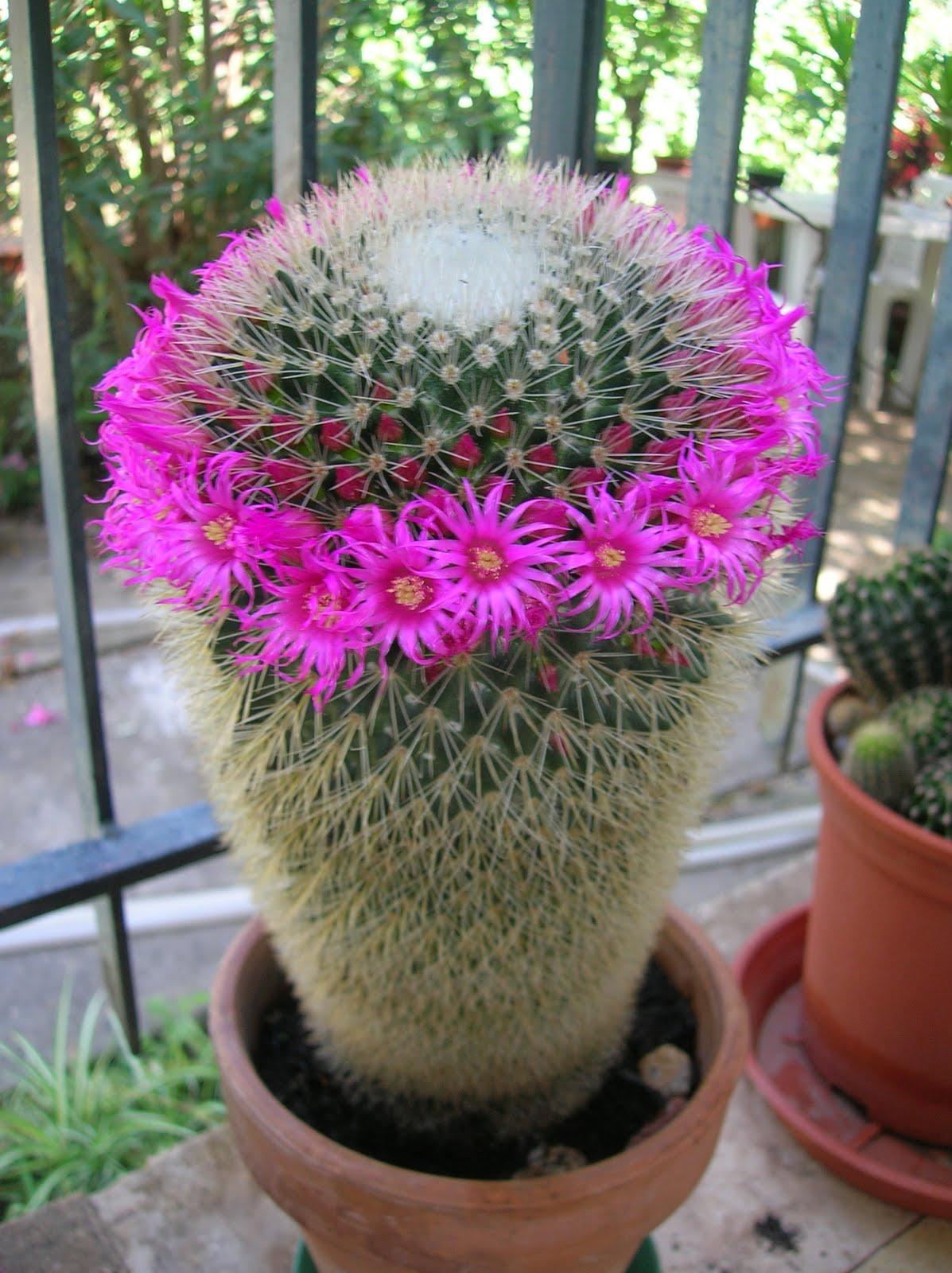 Il filo che crea piante grasse che passione for Pianta con fiori rossi