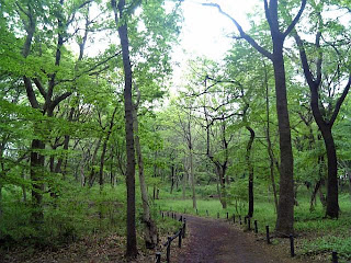 woods in funabashi