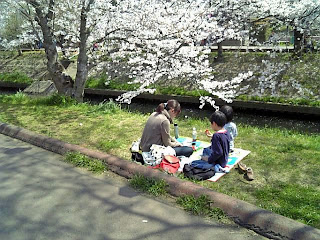 hanami in a river side
