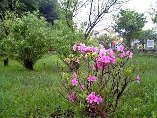 rainny park in spring
