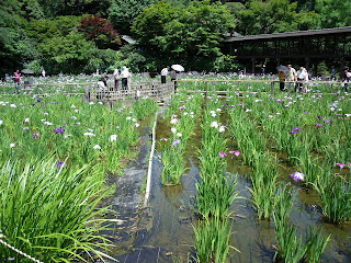 iris pond in the temple