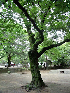 tree in funabashi shrine
