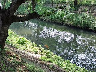 ebi-gawa(ebi-river)