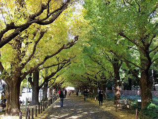 street lined with ginkgo trees in Jingu-gaien