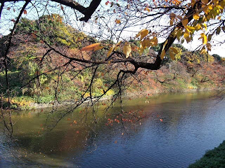 Chidorigafuchi in late autumn