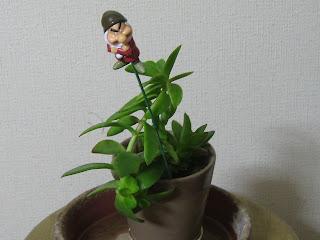 多肉植物B