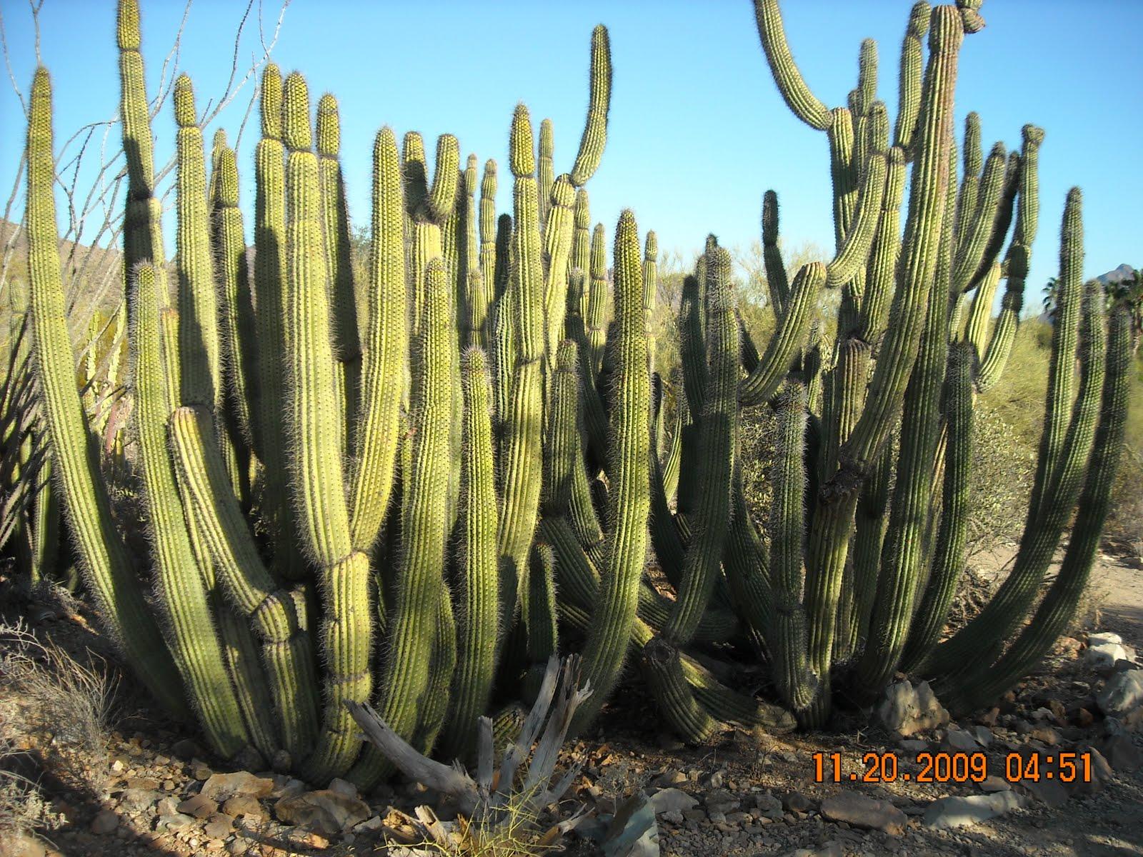 Рослини в пустелі фото 4 фотография