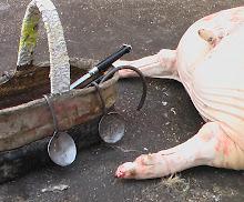 La matanza del marrano en Begíjar