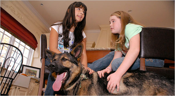 The curious case of Congo, an 85-pound German shepherd