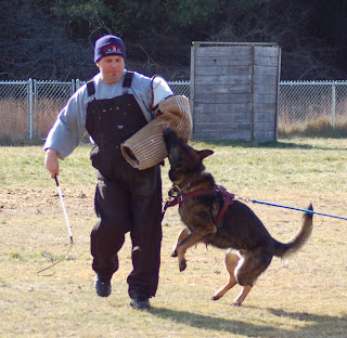 Image Result For Personal Protection Dog