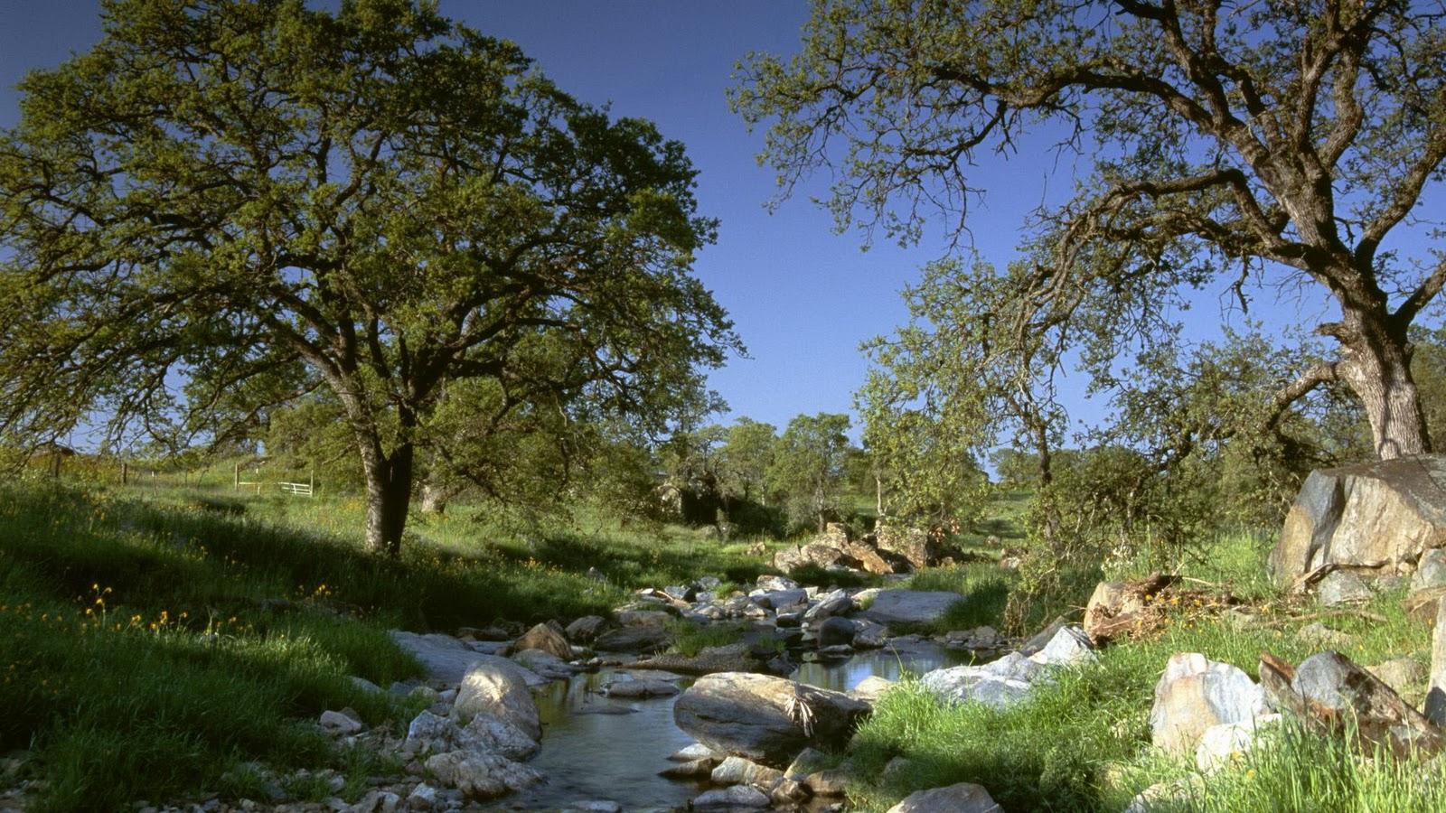 http://4.bp.blogspot.com/_vTQcDXfTeUo/TNKJAJk8aaI/AAAAAAAABX4/nuIAeQj2CVc/s1600/Nature+Full+HD+www.freehd.blogspot.com+%28158%29.jpg