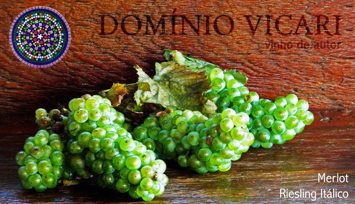 Vinho de autor Domínio Vicari
