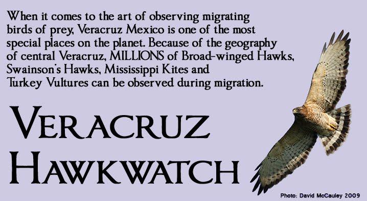 Veracruz Hawkwatch