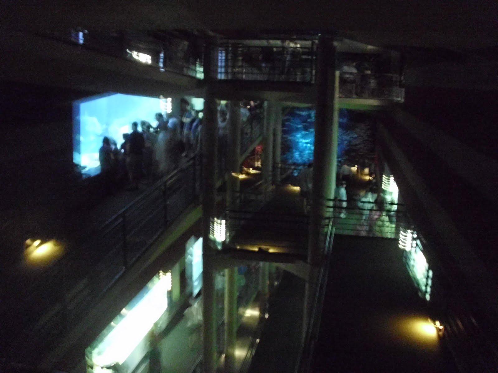 Chattanooga Aquarium Pictures