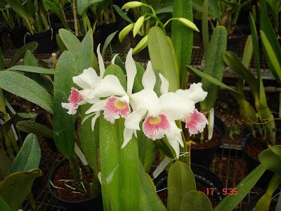 Cartel orquideofilos visitan vivero en atlixco puebla for Viveros de plantas en atlixco