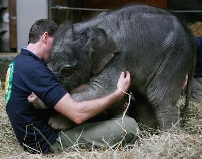 És megint egy kis elefánt - Jamuna Toni