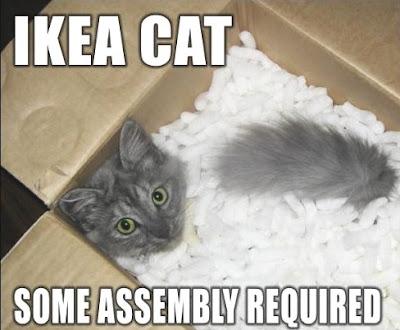http://4.bp.blogspot.com/_vbS7BIUoZ94/SYxFgc0UWKI/AAAAAAAABFY/I2p3UwN4kIA/s400/funny+cat+05.jpg