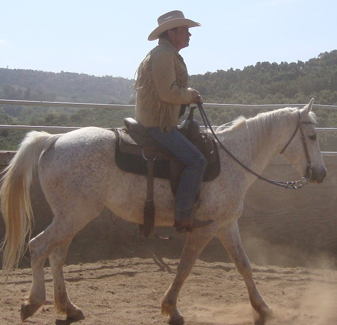Superstar Nick under saddle and up for adoption