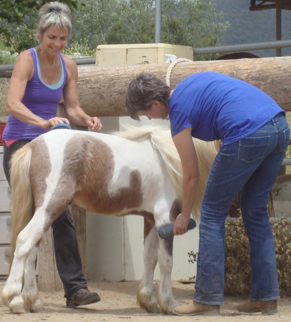 Volunteers Kelsey & Fiona Grooming Rod Stewart