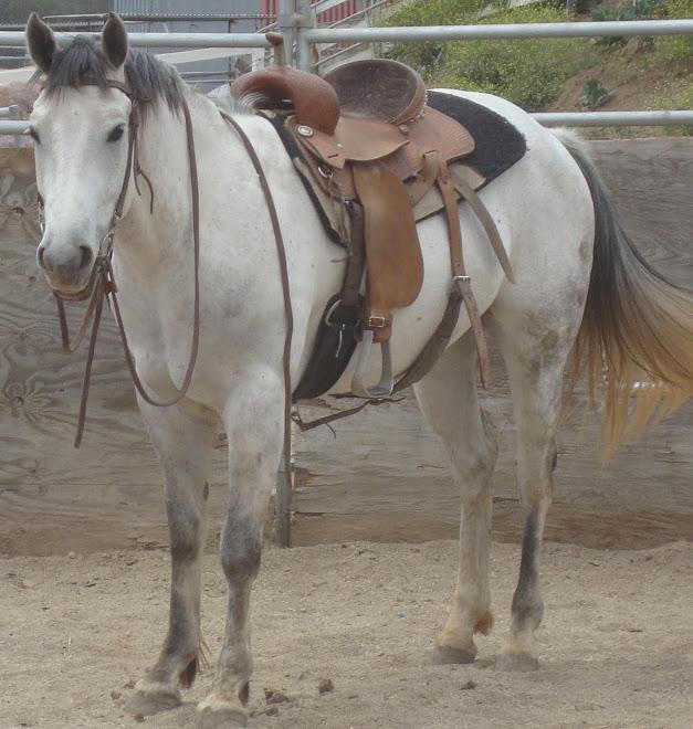 Mystery, Quarter Horse Gelding