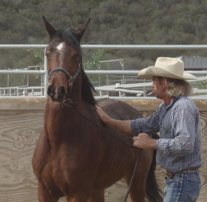 Jubilee, 4 yr old arabian mare