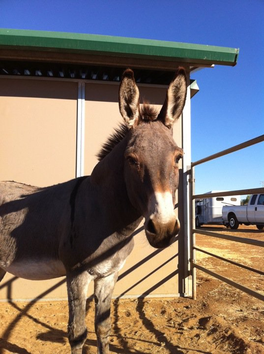 received this message from meredith the adopter of pokey the donkey