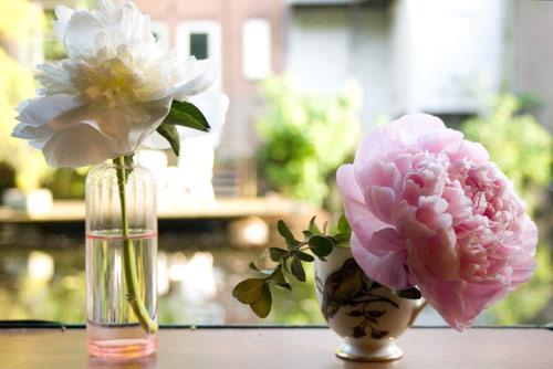 vejo flores em você 2