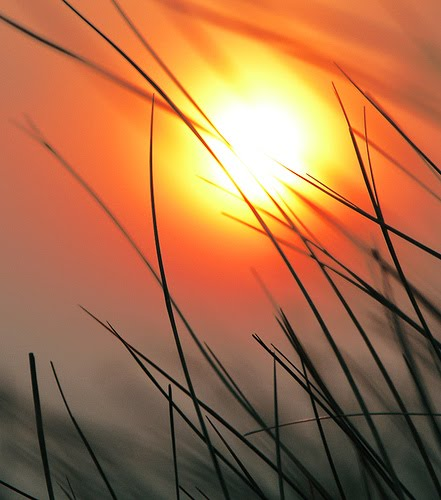 [setting++sun]