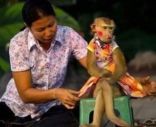 beautiful monkey pose