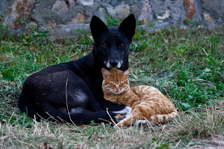 cat dog love