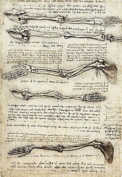 ... Man - by Leonardo da Vinci, 1492, drawing pen, ink and wash on paper