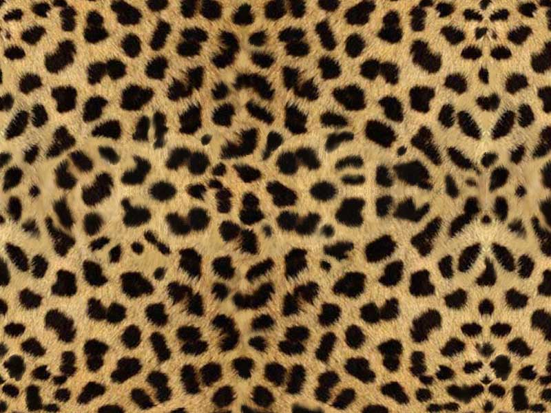 cheetah print background. colorful animal print