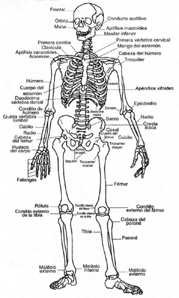 Doki sistema oseo para colorear - Imagui