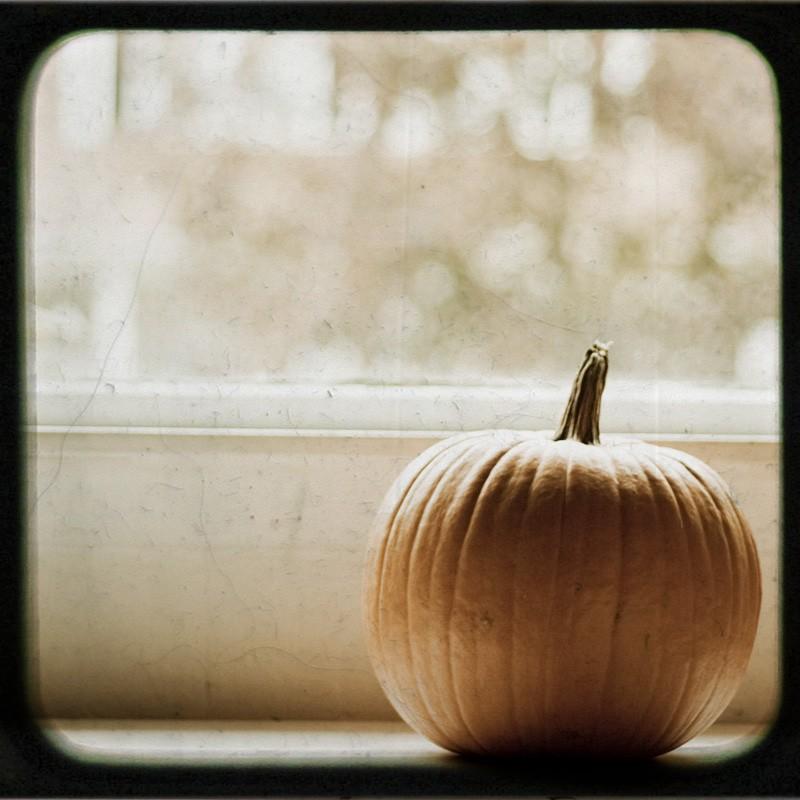 http://4.bp.blogspot.com/_vjWd449yHq0/TJoLTQEavWI/AAAAAAAAEOo/95WaJqXrI34/s1600/pumpkin.jpg