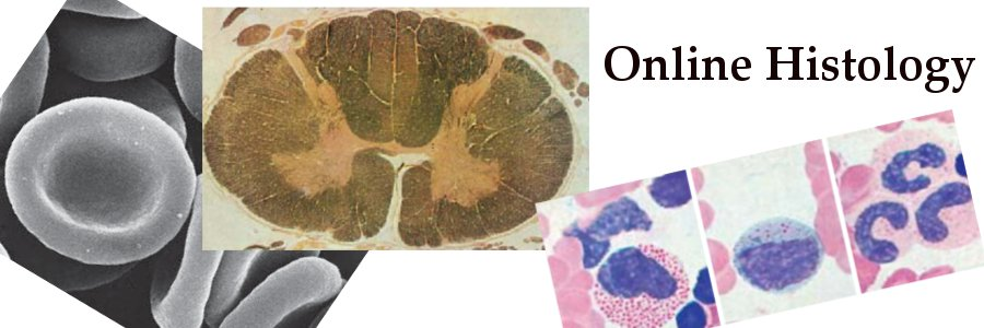 online histology blog