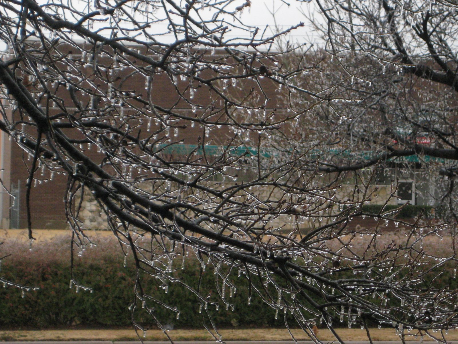[Icy+branches.JPG]