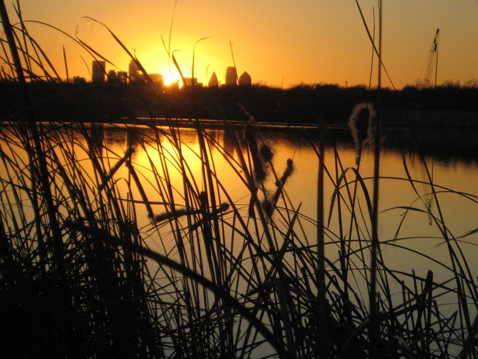 [Cattail+Sunset2.JPG]