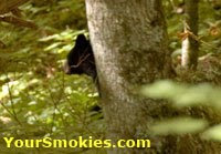 Great Smoky Mountains Nat Park Black Bear encounter and lesson learned.
