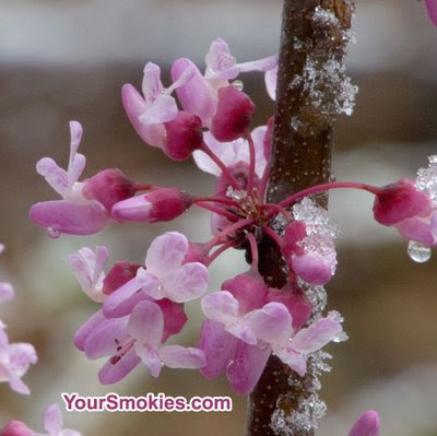 Protect your plants against tonight's hard freeze in the Smokies