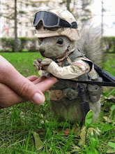 Send Nuts to the Troops...Congress has plenty to spare