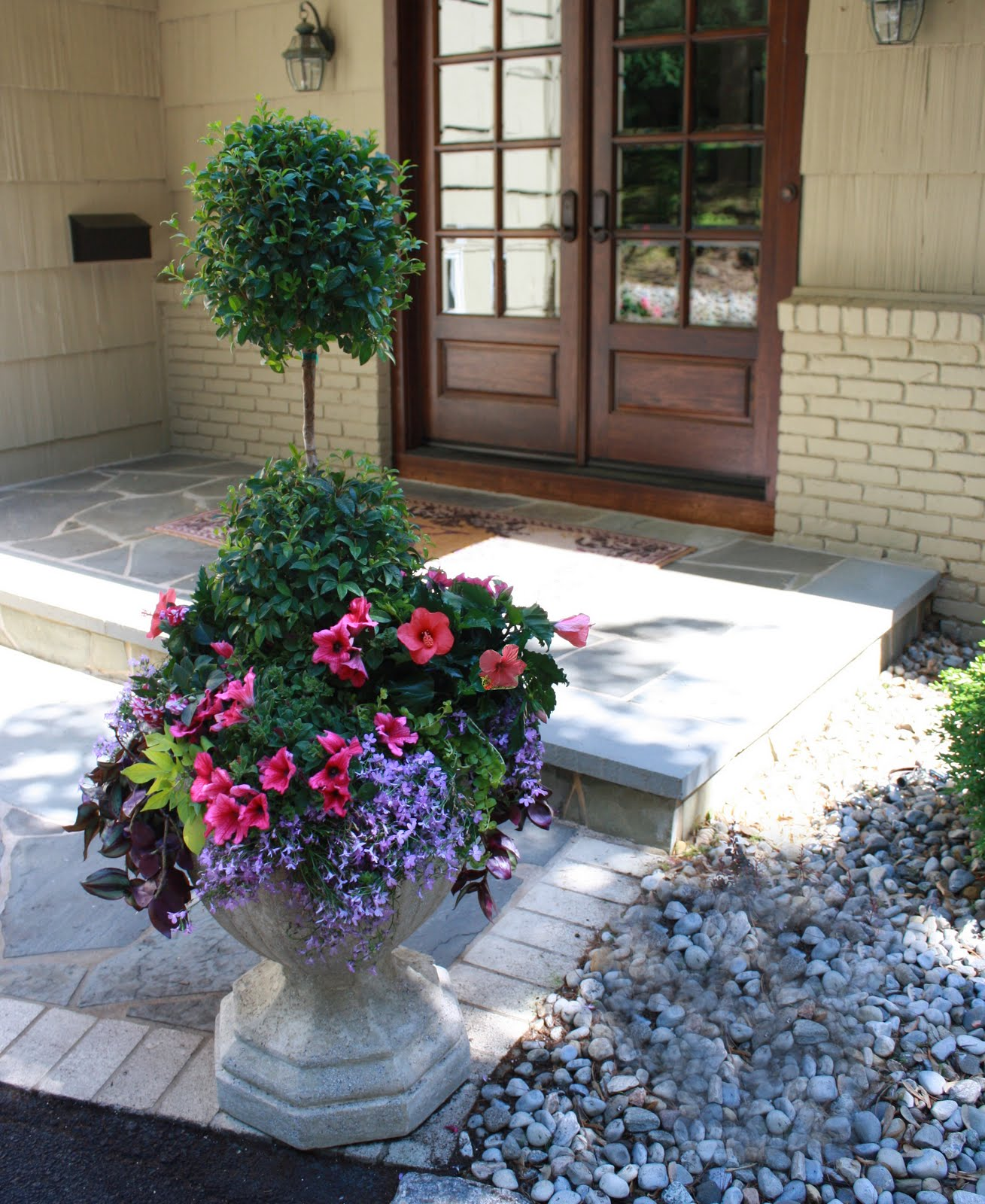 flores del sol: eugenia topiary container garden