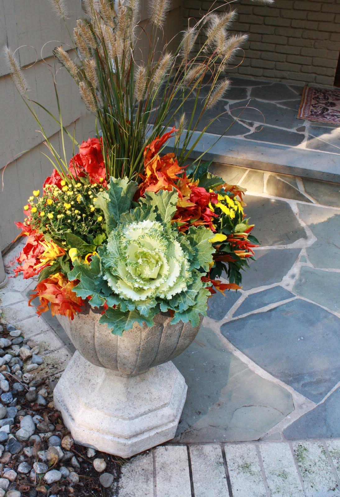 Flores Del Sol Autumn Flower Planting Choices