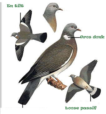 tells online profiling comment maximiser ses gains la chasse au pigeon blog de simon legouge. Black Bedroom Furniture Sets. Home Design Ideas