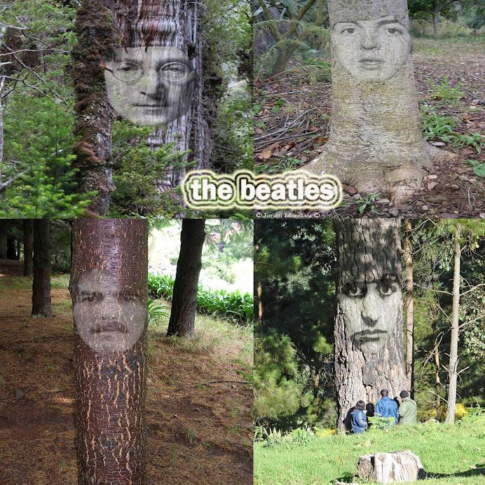 The Beatrees