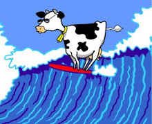 SURF NORMAND VACHE+SURF
